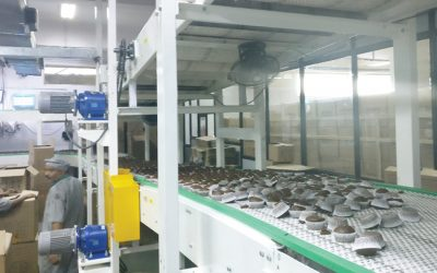 Cup Cake Cooling & Packing Spiral Conveyor System